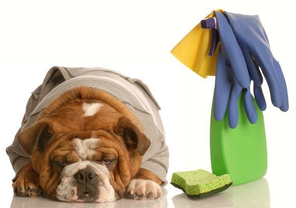 <p>Fios soltos, janelas sem telas e produtos de limpeza mantidos em lugares impróprios podem causar um desastre com os animais de estimação</p>