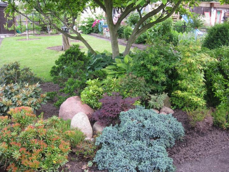8 best gardening images on pinterest succulents succulent plants and succulents garden. Black Bedroom Furniture Sets. Home Design Ideas
