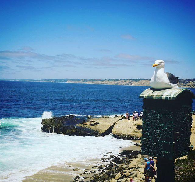 """Keep calm.... . """"dalam situasi apapun jaga ketenangan hati"""" .  #keepcalm #lajolla #california #lajollalocals #sandiegoconnection #sdlocals - posted by Herman kho  https://www.instagram.com/hermanhaslim. See more post on La Jolla at http://LaJollaLocals.com"""