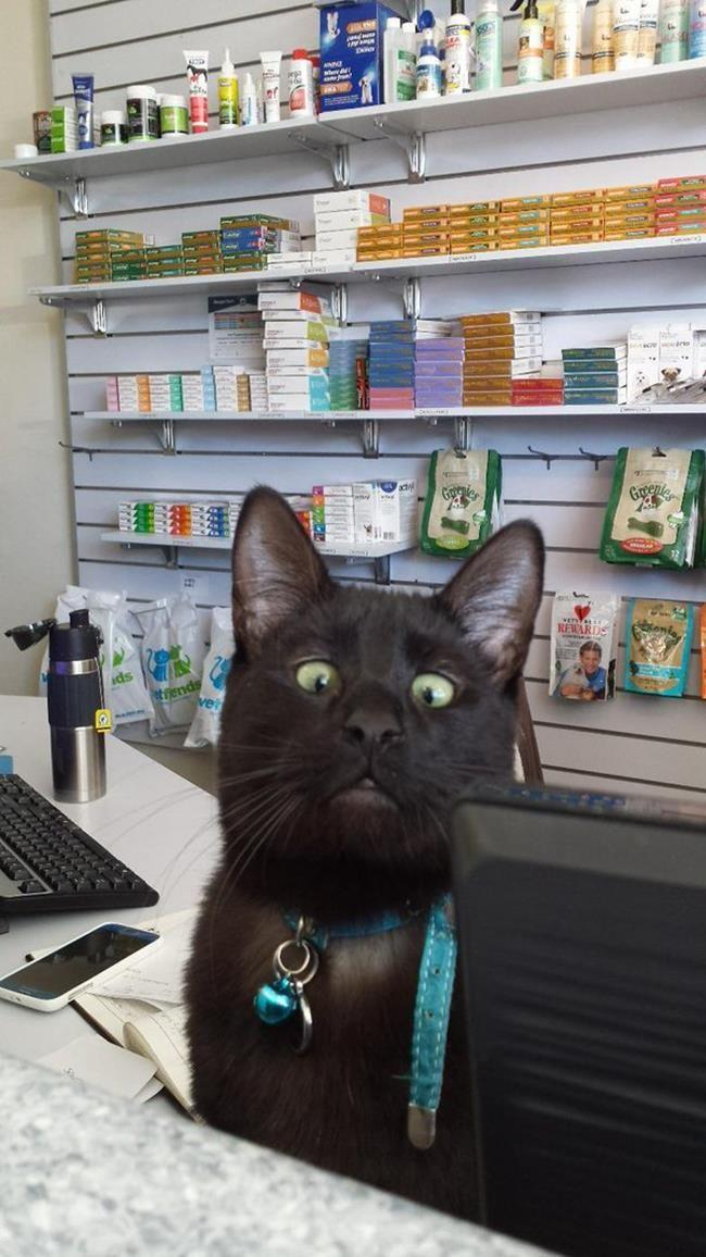 Bir Gezginin Kedi Günlüğü ile Tanışmaya Hazır Mısınız: 'Travelling Cats' Sanatlı Bi Blog 30