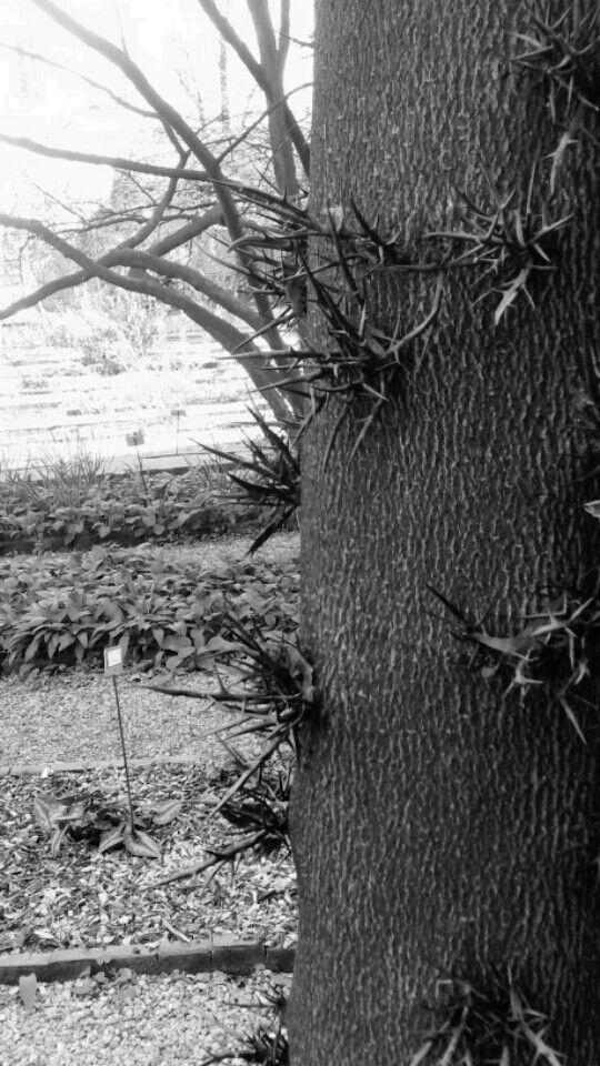 #Thornes #nature#defense #secretmilan