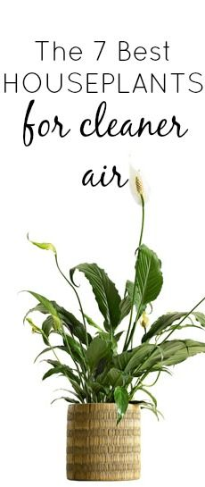 Finding plants that clean the air could make your lungs healthier and put you in a better mood.