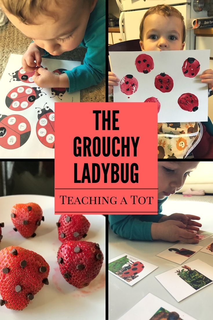 Eric Carle Author Study - The Grouchy Ladybug Activities for Toddlers