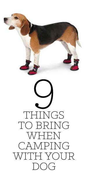 Spring is soon upon us, and that means, Summer's just around the corner! - As a reminder - here are 9 things to bring when Camping with your Dog