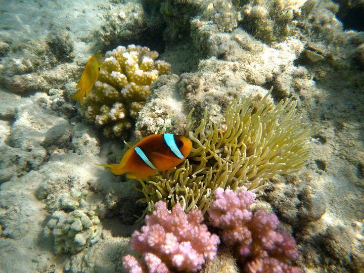 Nemo by Kaia Huus - Photo 7348019 - 500px