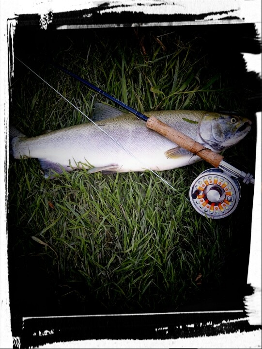 August Great Lakes Coho