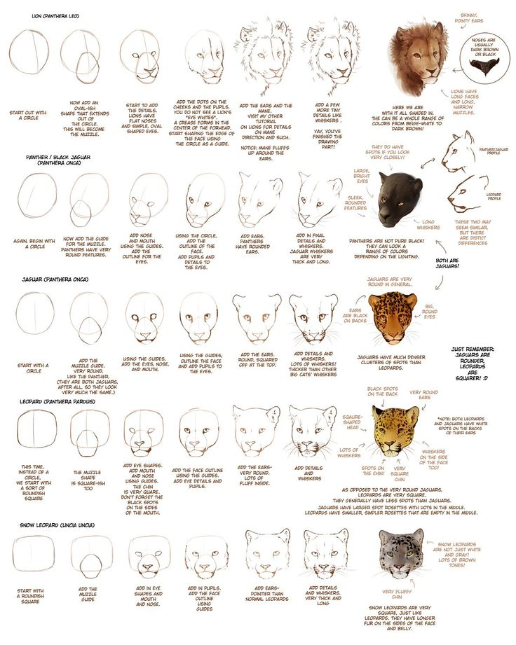 How to Draw Big Cats Part 1 by *TamberElla on deviantART