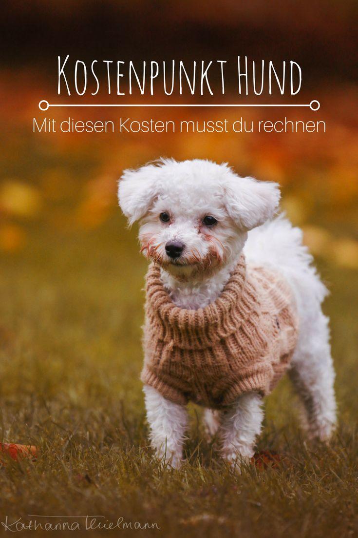 Kostenpunkt Hund - Mit diesen Ausgaben musst du rechnen. Monatliche- & Fixkosten