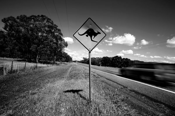 Aussie Kangaroo Road Sign