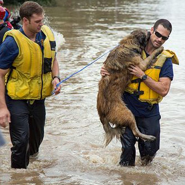 Firefighters rescue grateful dog from storm in heartwarming photo