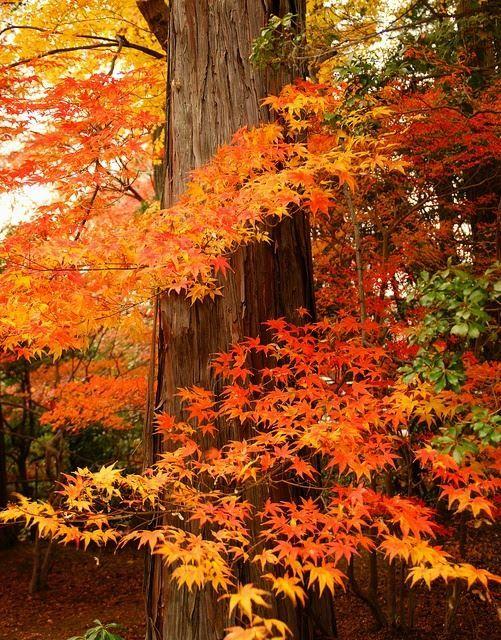 Crisp Autumn Days