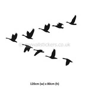 images of flying geese yahoo image search results