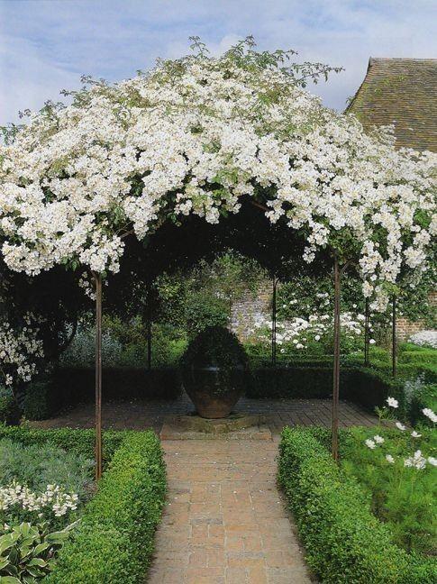 Pin By Krisztina Lenk On Moon Garden In 2020 Beautiful Gardens White Gardens Gorgeous Gardens