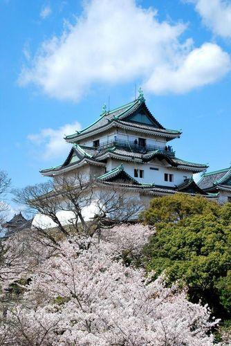 Wakayama Castle cherry blossoms in full bloom, Wakayama, Japan