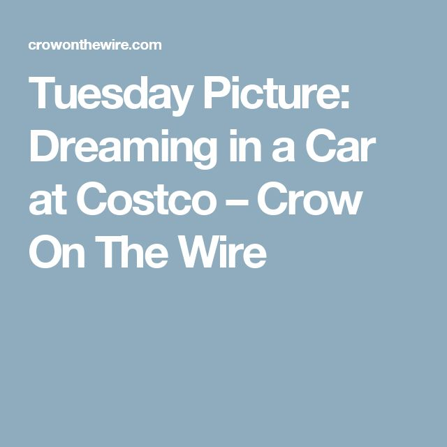 Tuesday Picture: Dreaming in a Car at Costco – Crow On The Wire