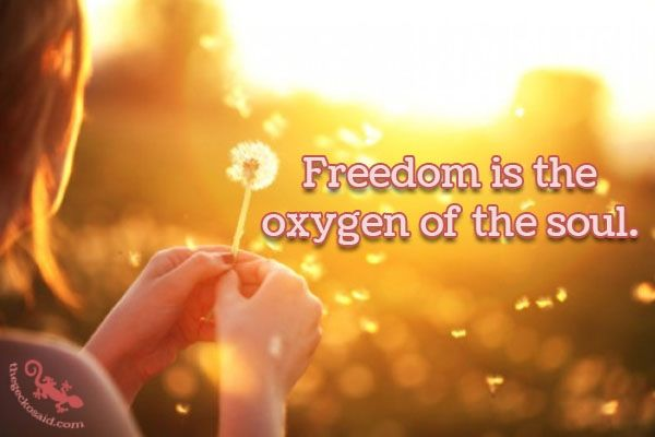 """""""Freedom is the oxygen of the soul.""""  #freedom #oxygen #soul  ©The Gecko Said - Beautiful Quotes - www.thegeckosaid.com"""