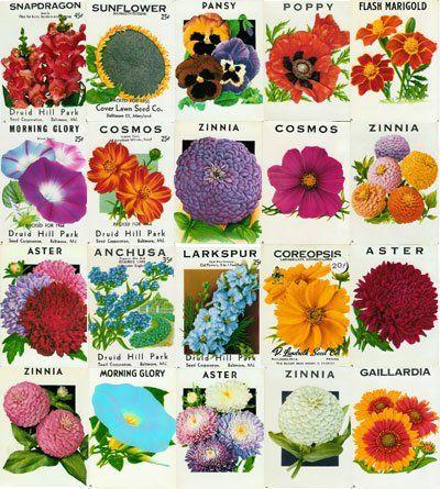 Vintage Flower Seed Packets At Landreth Seed
