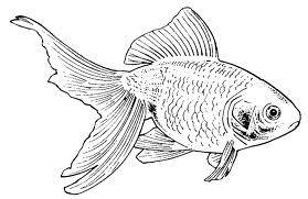Goldfish line drawing - photo#32