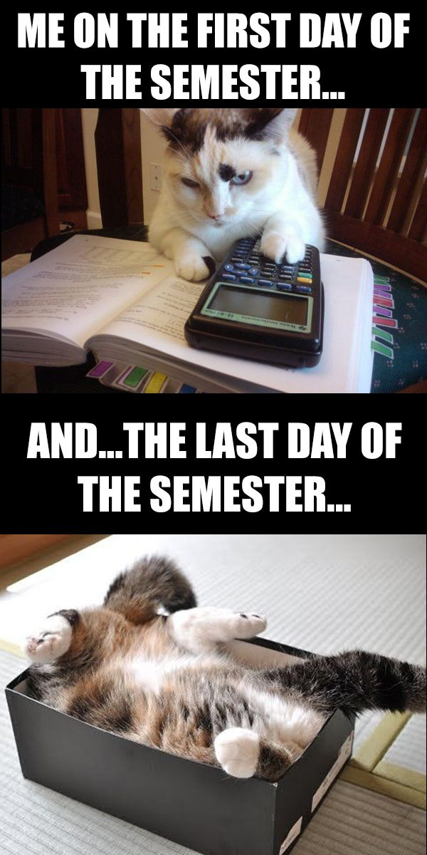 Last Day Of The Year Meme