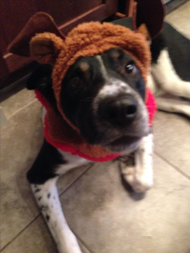 Our little reindeer pup!