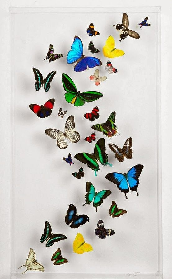 Framed Butterflies from Peru.....................................singles, and groups @ Frame By Frame
