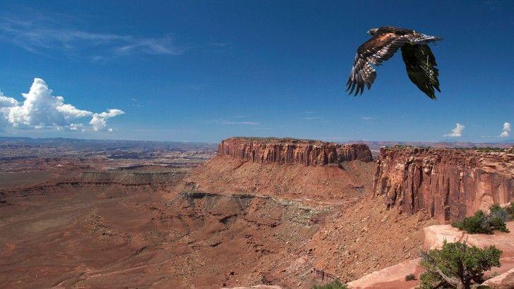 Eagle Over Rocks - Fondos de pantalla HD. Fondos de escritorio. Protectores de pantalla. Wallpapers HD. Fondos de pantalla.