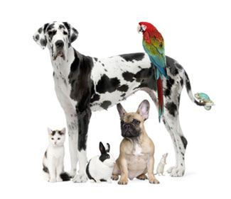 Pet Shop Online 2 Pet Shop Online
