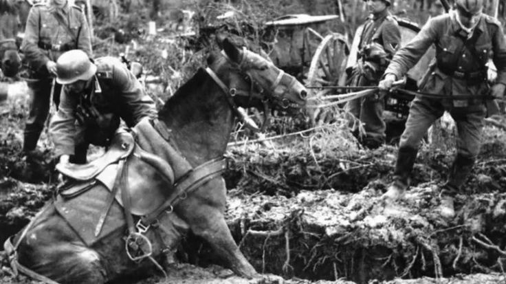 The unsung heroes of war: A German cavalry horse gets stuck in Russian mud. Tens of thousands of these magnificent animals perished on the Eastern Front.