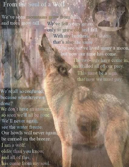 The Prayer Of The Wolf!