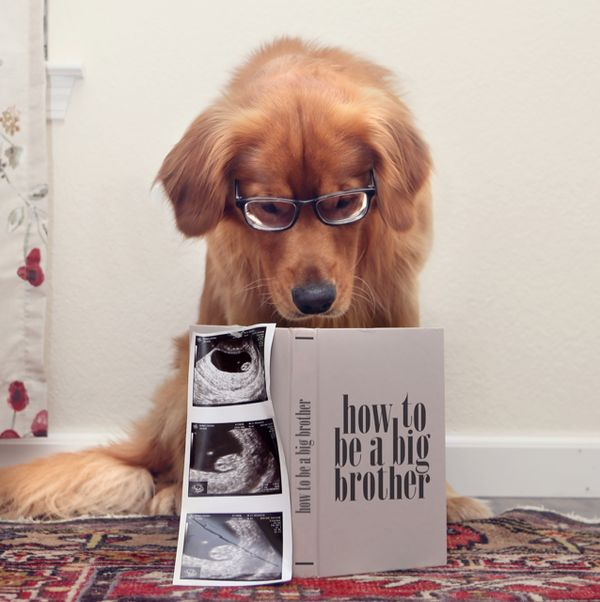 Pregnancy announcement with dogs Baby Announcement – Birth Announcement with Dog