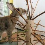 �����Toys & Enrichment Archives – The Rabbit House