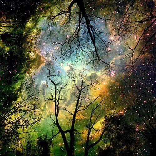 NebulaStarry Sky, Trav'Lin Lights, Northernlights, Starry Night, Stars, Northern Lights, Trees, Night Sky, Heavens