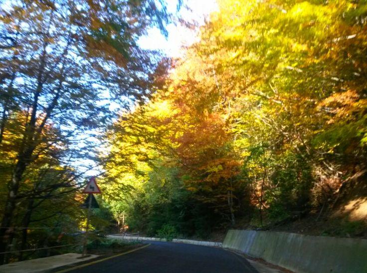 #sinaia#autumn