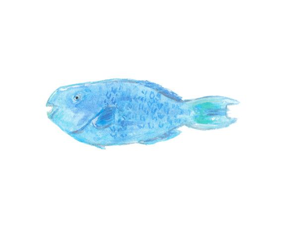 ''Blue Parrotfish'' Watercolor Print by Christina Maas.