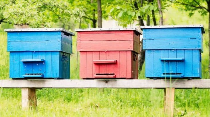 Best bee hives and bee hive plans so you can do your part in saving the bees and give the bees a home. Bees are vital for pollination & honeybees for honey
