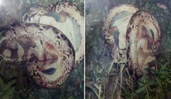 Inilah 3 Kisah Nyata Manusia Dimangsa Ular Besar http://ift.tt/2olH9CS Kasus ular memangsa manusia mungkin hanya ada dalam film saja sementara di kehidupan nyata kasus seperti ini sangat jarang terjadi. Tapi pada kenyataannya ada kisah manusia dimangsa ular yang benar-benar terjadi.Ular yang memangsa manusia tentunya memiliki ukuran tubuh yang sangat besar. Dan salah satu faktor yang membuat ular sampai memangsa manusia adalah karena mereka kelaparan dan merasa terganggu dengan kehadiran…