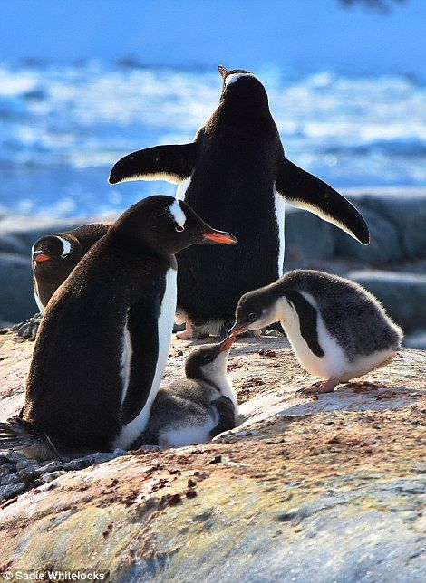 Eventually, on the fifth day it was announced that they had crossed the Antarctic Circle a...