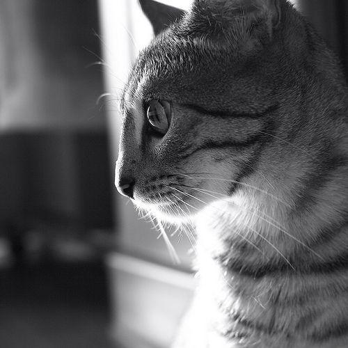Staring...