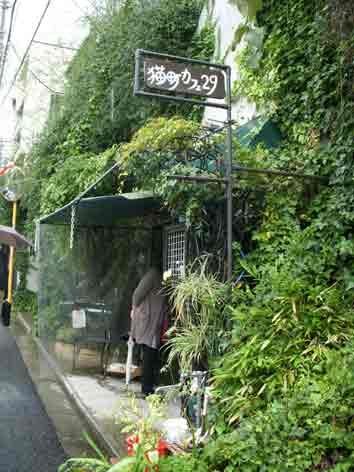 谷中 猫町カフェ29 (cat cafe in yanaka)