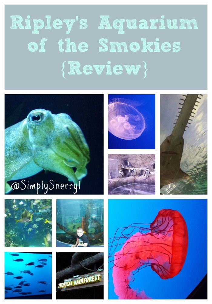 Best 20 Gatlinburg Aquarium Ideas On Pinterest