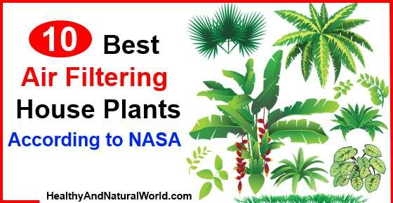 10 Best Air Filtering House Plants, According to N.s.a