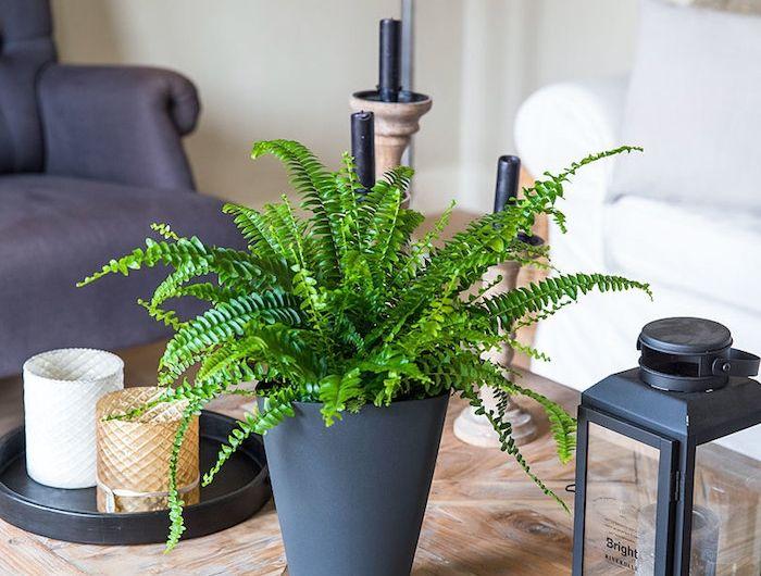 farn ist wrdig fr das wohnzimmer in der mitte vom tisch zimmerpflanzen schattig - Zimmerpflanzen Warme Wohnzimmer