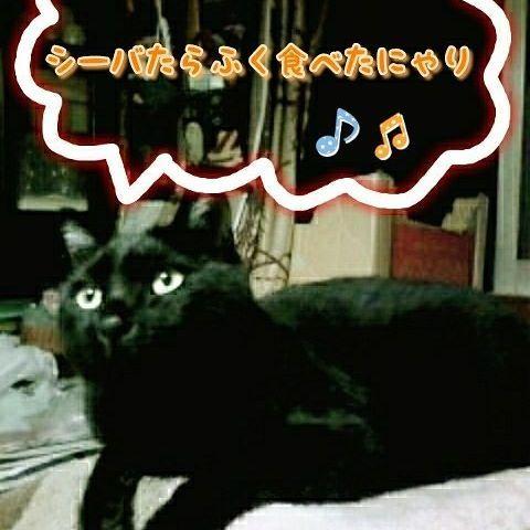 今日は #ニャンコ幼稚園 の登園日✨  幼稚園バス🚍が虹の橋口のバス停🚏に迎えに来てくれるにゃ🌈  クリスタルの森で大好きなシーバをお腹いっぱい食べたのが夏の一番の思い出です😽 ・ ・ ・ #愛猫#黒猫#クゥ #保護猫#野良猫 #猫大好き#猫好きさんと繋がりたい #ニャンコ幼稚園 #ニャンコ幼稚園の日 #絵日記