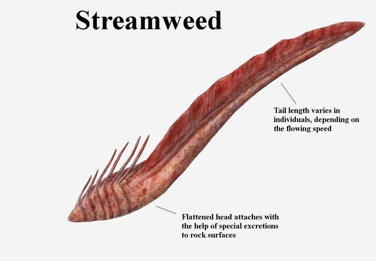 REP: Streamweed by Ramul.deviantart.com on @DeviantArt