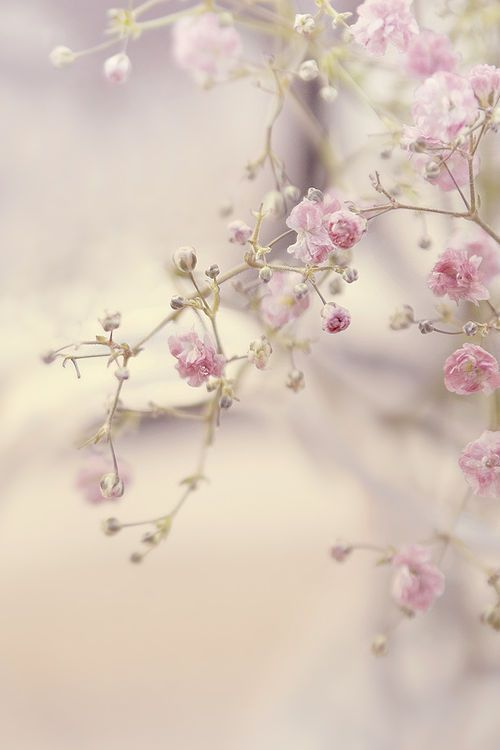 Bei kleinen, rosa Blüten geht uns das Herz auf.