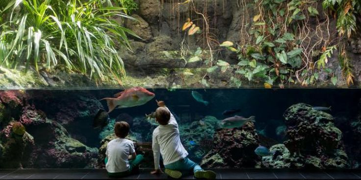 Großes Becken im Aquarium Berlin