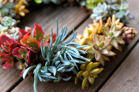 succulent!Diy Ideas, Living Wreaths Diy, Prudent Baby, Crafts Ideas, Vintage Home, Succulents Wreaths, Living Succulents, Stunning Living, Diy Succulents