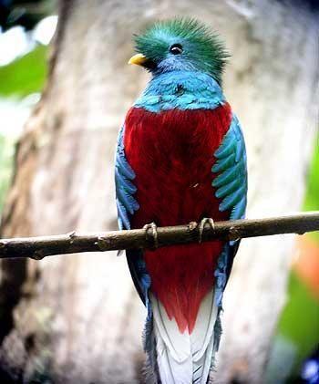 Las aves mas bellas del mundo