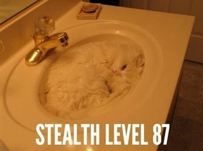 for the hubby: Level 87, Cats, Animals, Funny Stuff, Stealth Level, Sink, Kitty