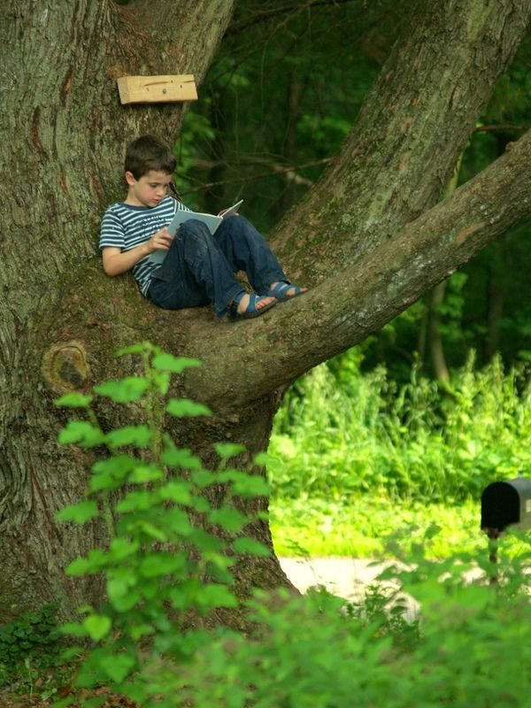 The perfect tree for a boy to read.